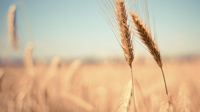SOFTWARE PER COPERATIVE AGRICOLE E VINICOLE